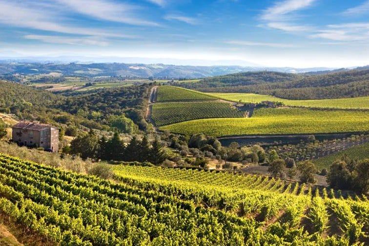 Chianti Vineyards :: Chianti and San Gmignano Guided Tour :: Florence Tour